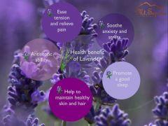 Raumduft Lavendel, Room Spray Lavender 65ml